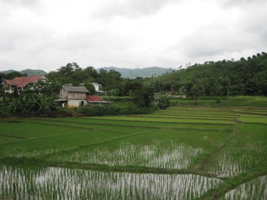 002 thailande improbable