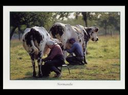175-la-traite-des-vaches.jpg